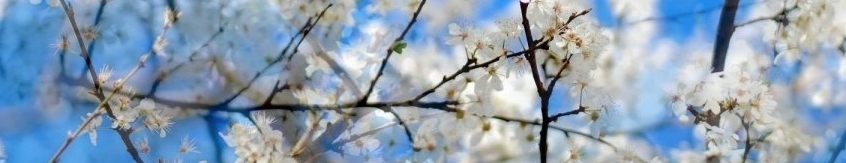 pavasaris_vasara